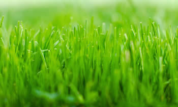 Lawn Service in Burlington NC Lawn Care in Burlington NC Lawn Mowing in Burlington NC Lawn Professionals in Burlington NC