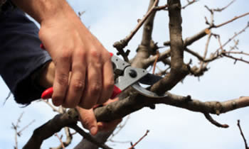 Tree Pruning in Burlington NC Tree Pruning Services in Burlington NC Quality Tree Pruning in Burlington NC
