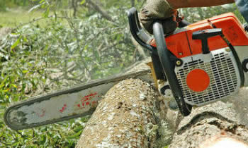 Tree Removal in Burlington NC Tree Removal Quotes in Burlington NC Tree Removal Estimates in Burlington NC Tree Removal Services in Burlington NC Tree Removal Professionals in Burlington NC Tree Services in Burlington NC