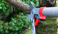 Tree Pruning Services in Burlington NC