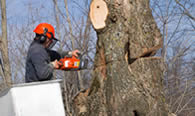 Tree Removal in Burlington NC